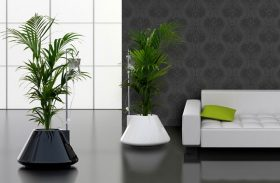Indoor Modern Planters Discussed