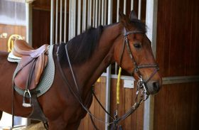 Comparing the Different Types of Horse Saddles