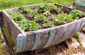 Gardening Dilemma: Container or in Ground Gardens?