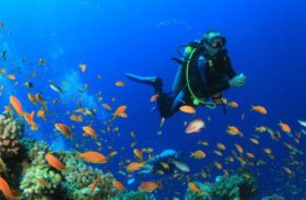 Scuba Diving Gear: To Rent or to Buy?