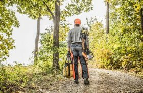 Tree Pruning and Removal: DIY or Hire a Professional?