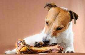 Dogs and Bones: To Chew or Not to Chew?