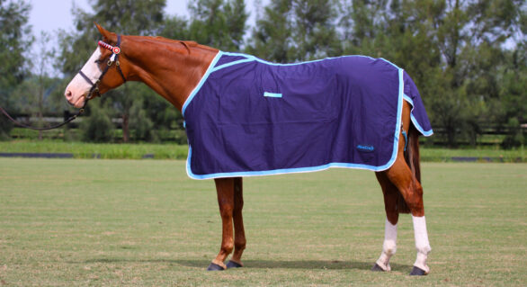 Horse Products: To Rug or Not To Rug?