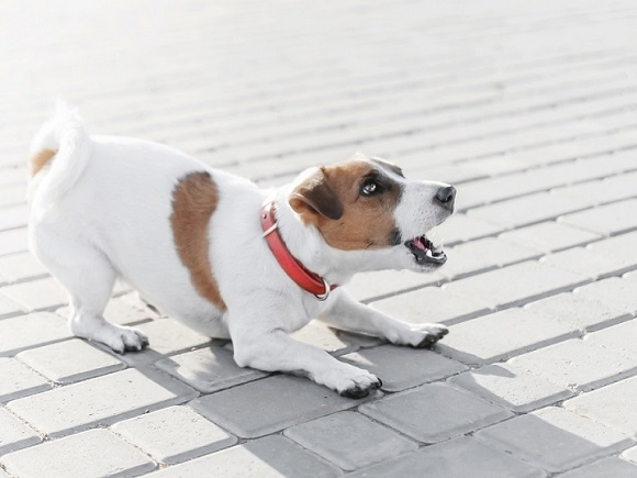 Comparing the Best Models of Anti-Bark Collars for Small Dogs in 2019