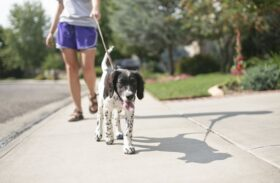 Dog Harness vs. Collar: What's the Best Way to Control Your Pet?