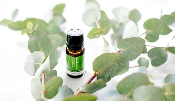 Eucalyptus_pure_Essential_Oil