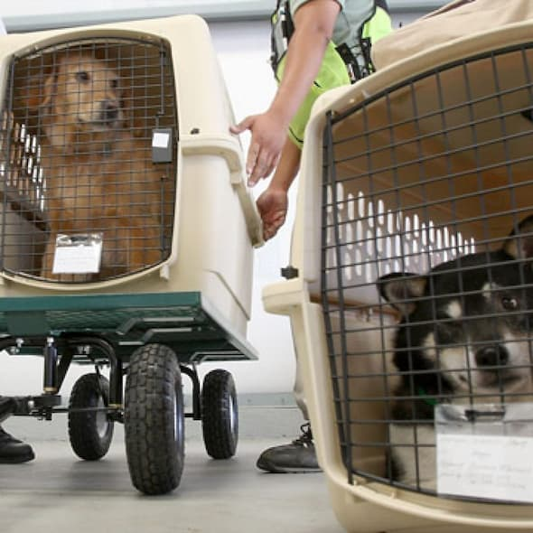dog carriers for air travel