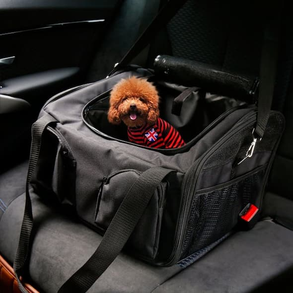 dog inside his carrier in the car