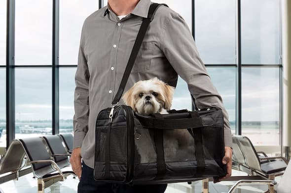 man at the airport with his dog inside travel carrier