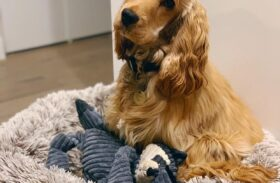 The Different Types of Dog Beds: Choose the Best One for Your Furry Pal