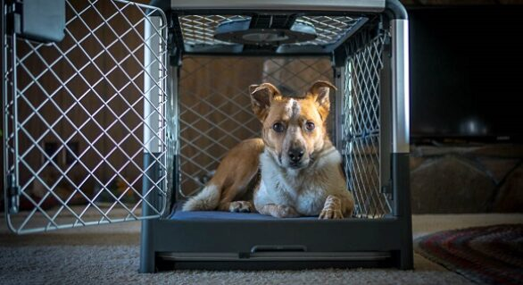 Dog Supplies: Different Types of Crates Compared