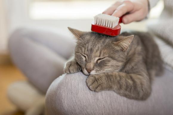 cat brushing
