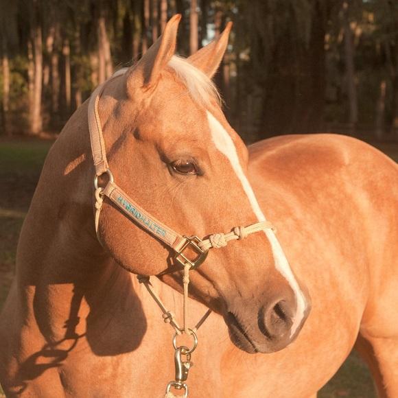 beautiful horse halter