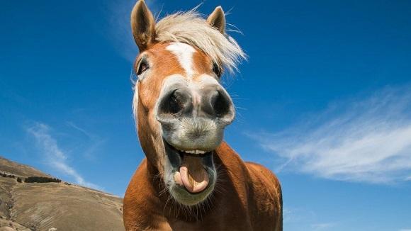 horse feeling happy