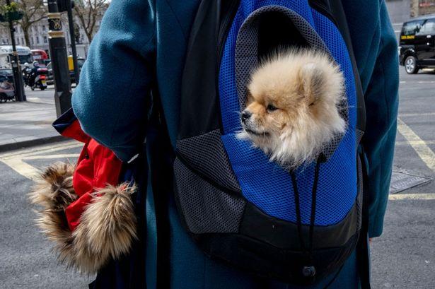 dog carier