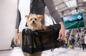 Pet Supplies: Comparison of Different Types of Dog Carriers