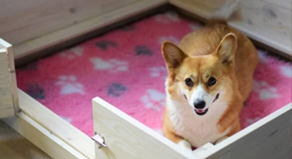 Dog Supplies: Whelping Box and Playpen Compared